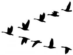 Zugvögel XL