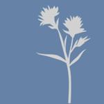Blume M