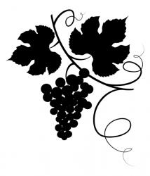 Weintraube L